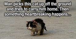 Now this picture is something else...: Sad Animals, Sad Picture, Sad Stories About Animals, Sad Cat, Sad Anime Guys, Crying Animal, Meaningful Picture, Sad Animal Pictures