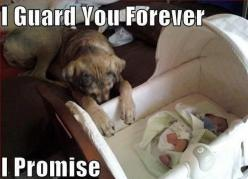 Oh my goodness...the sweetest picture ever!: Best Friends, Sweet, I Promise, I Love, Baby, German Shepherd, Guard Dog, Adorable Animal