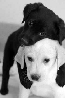 Puppy love.: Cute Puppie, Best Friends, Puppy Hug, Puppy Love, Black And White, Black White, Cute Animals, Adorable Animal