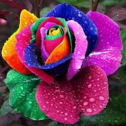 Rosie, this rose was created especially for you, to bring joy and hope, for a great today, and better tomorrow and a beautiful life of love.: Beautiful Flower, Pretty Flower, Beautiful Rose
