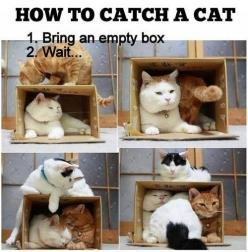 The Trap Has Been Set...: Kitty Cat, Funny Cat, Cat Love, So True, Crazy Cat, Funny Animal, Cat Traps, Cat Lady