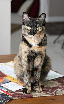 This cat reminds me so much of my beloved Gypsynow over the rainbow (Photography by SarahHunt0: Beautiful Kitty, Cats Cats, Beautiful Cat, Kitty Cats, Calico Cats, Cat Facts, Cats Kittens, Cat Lady