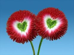 UNIQUE Flower...reminds me of Care Bears: Flower Heart, Amazing Flower, Nature, Red Flower, Unique Flower, Heart Flowers, Beautiful Flowers, Valentine, Natural Heart