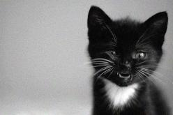 "What part of ""meow"" don't you understand?: Kitty Cats, Black Cats, Pet, Crazy Cat, Cute Animals, Box, Black Kittens, Blackcat, Cat Lady"