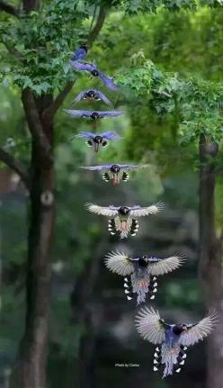 #amazing #view .ღღ http://vanikroman.blogspot.cz/p/libertagia.html.. Repinned by Rania Salah . www.Pinterest.com/raniany32/photography .: Animals, Google, Nature, Beautiful Birds, Blue Jay, Photography, Birds In Flight
