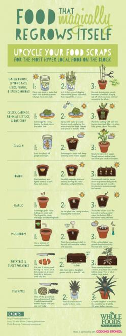 Be sure to upcycle your food scraps... All of this food will magically regrow itself!