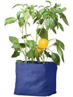 Colorful Tomato Grow Bag, might try these instead of a tradtional garden next year.: Garden Ideas, Tomato, Pepper Grow, Gardening, Bags
