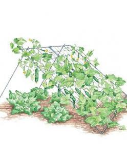 Cucumber trellis with room for lettuce underneath...need one or two of these.