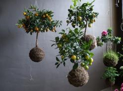 "Ethereal Beauty: Fedor van der Valk Discusses His String Gardens.  ""I created 3-D crochet webs as a base or skeleton for a miniature world.  This needed plants to prevent the whole thing for becoming too clumpy, I came up with the idea to hang the pla"