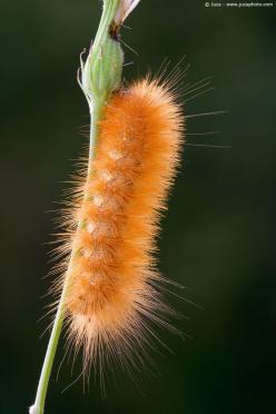 Fuzzy Caterpillar.  Go to www.YourTravelVideos.com or just click on photo for home videos and much more on sites like this.