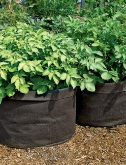 Gardener's Best® Potato Grow Bag: Organic Gardening, Garden Art, Potato Grow, Garden Tips, Gardener S Best 174, Repurposed Things, Ogrodowe Diyy, Container Gardening