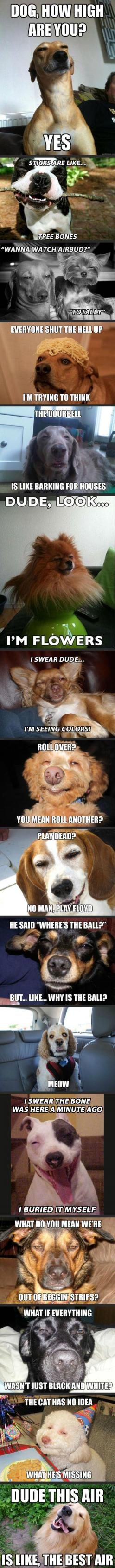 "Hahahahahaha omg. ""Roll over? You mean roll another?"" Looks just like a blonde lulu!!!!: Stoned Dogs, Stoner Dogs, High Dogs, Dogs On Drugs, Funny Stuff, Funny Animal, So Funny"