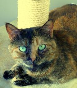 I love torties! #cat