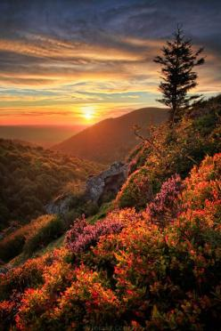 Mountainous flower and vegetation filled sunrise.  Referenced by WHW1.com: Business Hosting - Affordable, Reliable, Fast, Easy, Advanced, and Complete.©: Nature, Sunsets, Beautiful, Sunrise Sunset, Mountain Sunset, Place, Photo