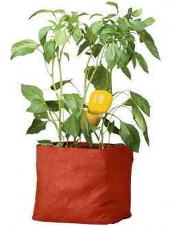 Pepper Grow Bag | Buy from Gardener's Supply      Grow peppers in any sunny spot!     Made from patented, double-layer polypropylene that lets roots breathe     Grow Bags make the most of limited space and fold flat for off-season storage