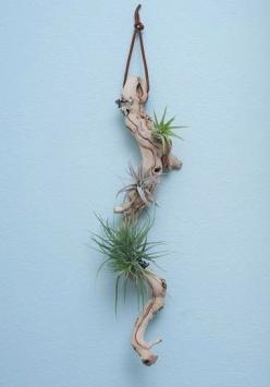 plant and drifts wood display, this would be a great gift idea