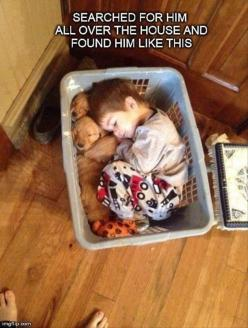Seriously, everyone should be required to nap with a basket full of puppies everyday.: Puppies, Animals, Sweet, Dogs, So Cute, Puppys, Kids