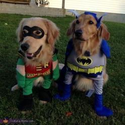 These cuties are ready to fight evil  but Batman looks like he needs saving... #goldenretrievers