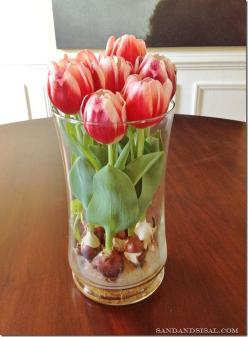 These iconic spring blooms make beautiful centerpieces and great gifts, especially during the cold, dark days of winter when spring seems far, far away.