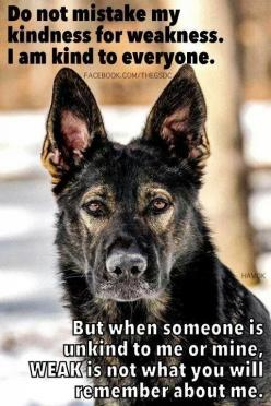 this is my Lola! She is very quite and friendly but if she don't like you ... you better watch out =): German Shepherd Dogs, German Shepherd Quotes, Germanshepherddog Pets, Dogs Loyalty Quotes, German Shepherds, German Shepard, Gsd, Animal
