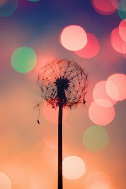 TIME FLIES.....................* by Neal., via Flickr