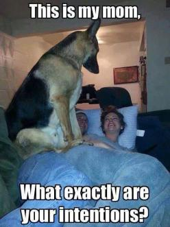 You Better Answer Him // funny pictures - funny photos - funny images - funny pics - funny quotes - #lol #humor #funnypictures: Animals, Dogs, Funny Pictures, Funny Stuff, Funnies, German Shepherds, Funny Animal, German Shepard
