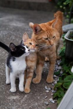 """After a time, even the dog begins to compromise with the cat."" -- Anonymous: Kitty Cats, Orange Cat, So Cute, Kitty Kitty, Cats And Kittens, Cat S, Cats Kittens, Kittycat"
