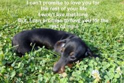.Awww... I love you too!.  Makes me want to cry at the thought.........: Awww Doxie, Dachshunds Doxies Weiners, Weenie Dogs, Doxie S, Dogs Dachshund, Weiner Dogs, Wiener Dogs, Dog S, Devoted Doxies