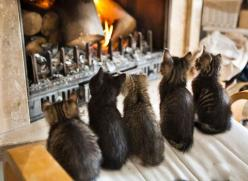 five kittens by a fire: Kitty Cats, Kitten, Kitty Kitty, Crazy Cat, Cat S, Fireplace, Cat Lady