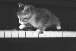 For my sisters and my mom: How many times did one of our cats walk across the piano keys? More times than I can count!: Cute Animal, Kitty Cat, Playing Piano, The Piano, Kittens Playing, Piano Kitten, Piano Kitty, Cat Lady