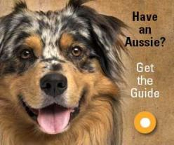 how to become a guide dog trainer australia