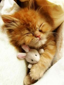 Having a bad dream...  shellsonthebeach:  http://pinterest.com/pin/270216046363258724/: Cute Animal, Kitty Cats, Orange Cat, So Cute, Kitty Kitty, Cat S, Sweet Dreams, Cat Lady, Adorable Animal
