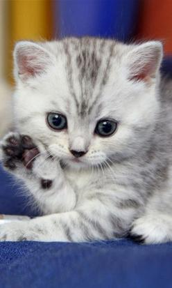 Hello,Everybody: High Five, Kitty Cats, Cute Animal, Kitty Kitty, Cutest Kitten, Kitty S, Cat S, Cats Kittens, Cute Kittens