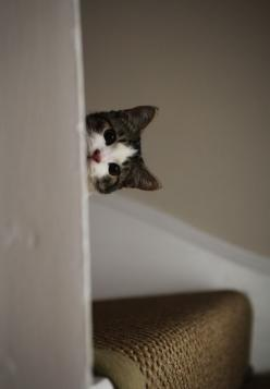 Hey... whatcha doin in there?: Cool Cats, Kitty Cats, Cute Cats, Ds Cat, Peek A Boos, Cute Kittens, Lolanimals Pets