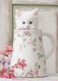 kitten in a floral pitcher <3: Kitty Cats, Shabby Chic, Kitty Kitty, Kitty S, Cat S, Peek A Boo, Cats Kittens, White Kittens, White Cat
