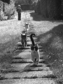 kitties on a walk, i guess! :D: Cats Cats, Kitty Cats, Kitty Kitty, Crazy Cat, Cat S, Cats Kittens, Adorable Animal, Cat Lady