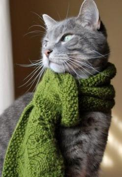 Kitty in a scarf: Kitty Cats, Warm Kitty, Green Scarves, Cat Scarf, Gray Cat, Kitty Kitty, Green Scarf, Grey Cats, Animal