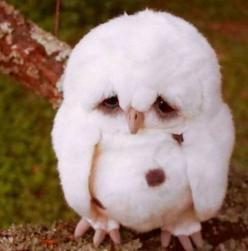 Ok things that fly creep me out and scare the pooo out of me, especially birds and bats...but I have to say this thing is pretty dang cute!: Little Owls, Baby Owls, Harry Potter, Poor Thing, Funny Animal, So Sad, Poor Baby, Sad Owl