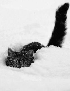 Our #fluffy friends take to the #snow in this adorable #winter photo album.: Kitty Cats, Peek A Boos, Snow Cat, Crazy Cat, Snow Kitty, Kitty Kitty, Snowcat, Cat Lady