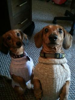 PEA-RUKKU. (n) same outfit. - [ Learn Japanese Words with Pinterest by webjapanese.com ]: Doggie, Dachshund Sweaters, Weenie Dogs, Sweaters Sweet, Poor Dog, Weiner Dogs, Wiener Dogs, Sweater Pups, Adorable Animal