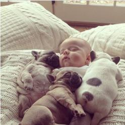 Puppies and baby!: Cuteness Overload, French Bulldogs, So Cute, Frenchbulldog, Cute Animals, Puppy, French Bulldog Puppies, Baby Puppies