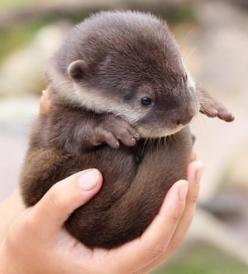 So precious!: Baby Otters, Adorable Animals, Otter Ball, Favorite Animal, Baby Animals, Otterly Adorable, Cutest Animal