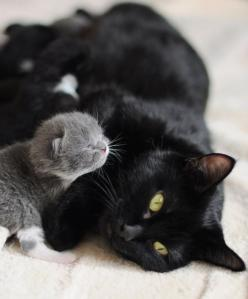 This is exactly what  the stray cat  and her surrogate kitty friend that I had hanging in my backyard looked like before a great animal savior came by to help them and her 5 babies too! Aww: Kitty Cats, Grey Kitten, Black Cats, Kitty Kitty, Cats And Kitte