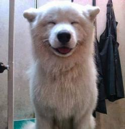5 Most Adorable smiling puppy faces you have ever seen | Smile#03 out of 5: Puppy Smile, Pet S Planet, Puppy Face, Smiley Puppy, Smiley Faces, Animal