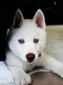 Can't wait to get our next fur baby!!