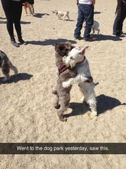 Dogs who believe in achieving world peace. | 35 Dogs That Will Make Your Day Instantly Better: Mini Schnauzer, Schnauzer Hug, Awesome Doggies, Hug Awwww, Cute Doggies Puppies, Dogs Hugging, Cutedogs Puppies, Doggie Hugs