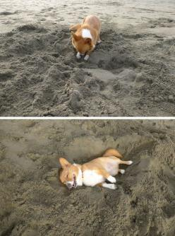 This dog who dug himself his very own nap hole. | 29 Dogs You Won't Believe Actually Exist * My dog does this - the sand is cooler!!!: Corgis, Animals, Beds, Dogs, Stuff, Pet, Funny, The Beach