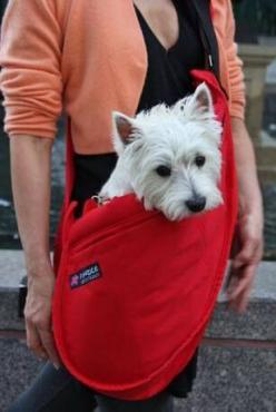 This satchel  is a great idea for carrying your small dog.