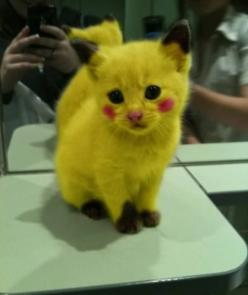you know this is the cutest thing you have ever seen....: Cats, Animals, Kitten, Pokemon, Stuff, Pikachu Kitty, So Cute, Funny, Things