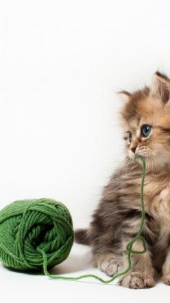 Adorable kitten  Kick start your weight loss today with www.skinnycoffeeclub.com. Plus get 10% off with the code PINTEREST10 at the end of checkout.: I Love Cats, Kitty Cats, Beautiful Cats, Adorable Kittens, Kittens Playing, Green Yarn, Cats Kittens, Cut